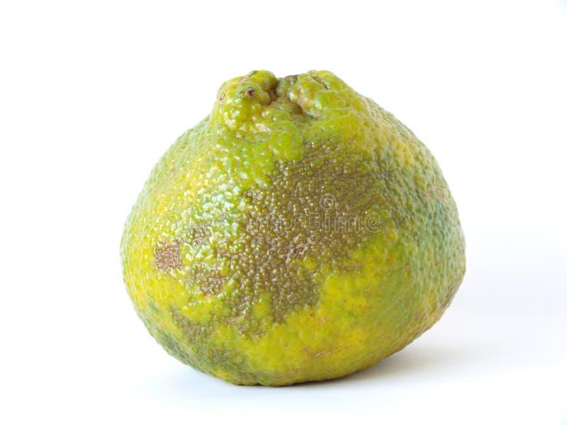 ugli плодоовощ стоковая фотография rf