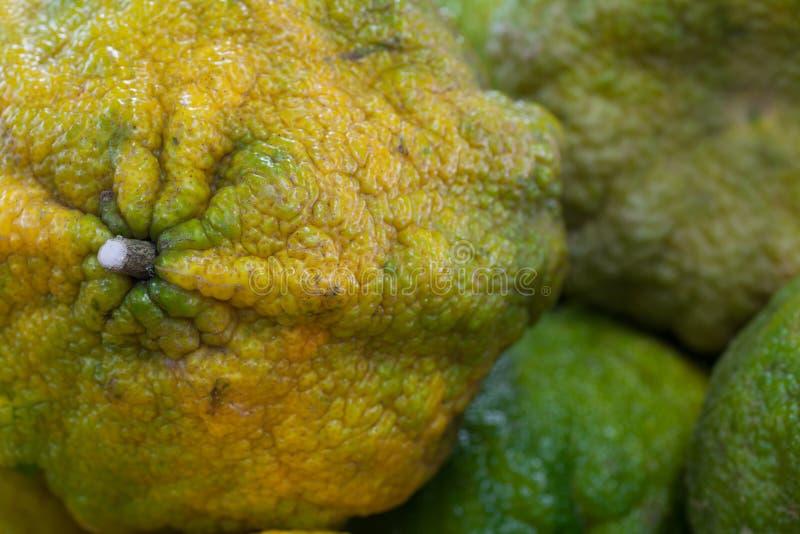 Ugli-Frucht lizenzfreie stockbilder