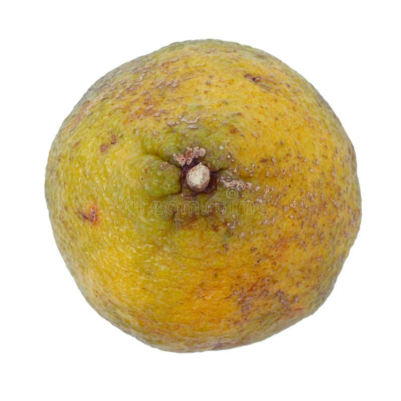 Ugli Fruit Also Called Uniq Fruit Free Stock Image