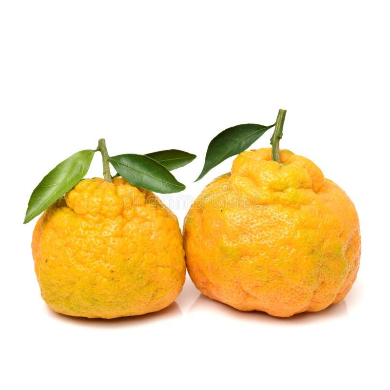 Free Ugli Grapefruit Royalty Free Stock Images - 107569019