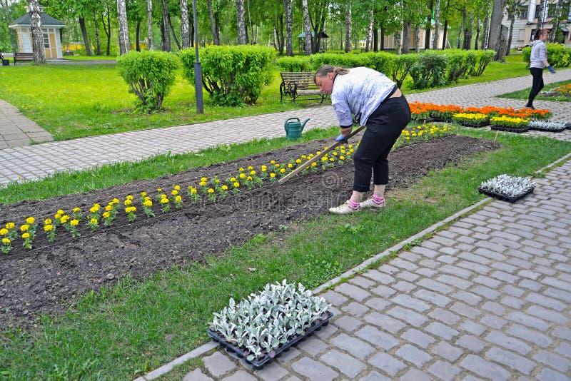 Uglich,俄罗斯 松懈种植的土壤花幼木在城市公园 图库摄影