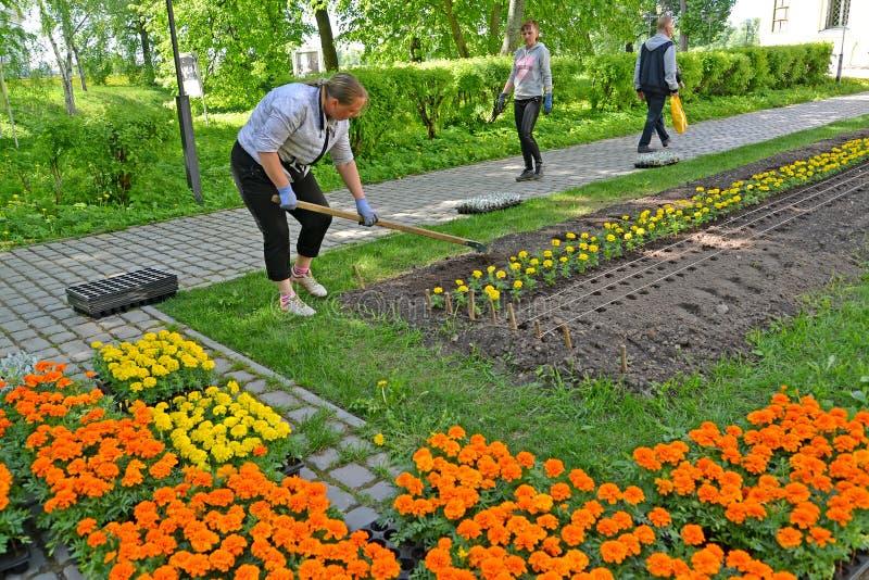 Uglich, Rusland De vrouwelijke tuinman maakt de grond voor het planten van bloemzaailing in los het stadsvierkant stock foto's