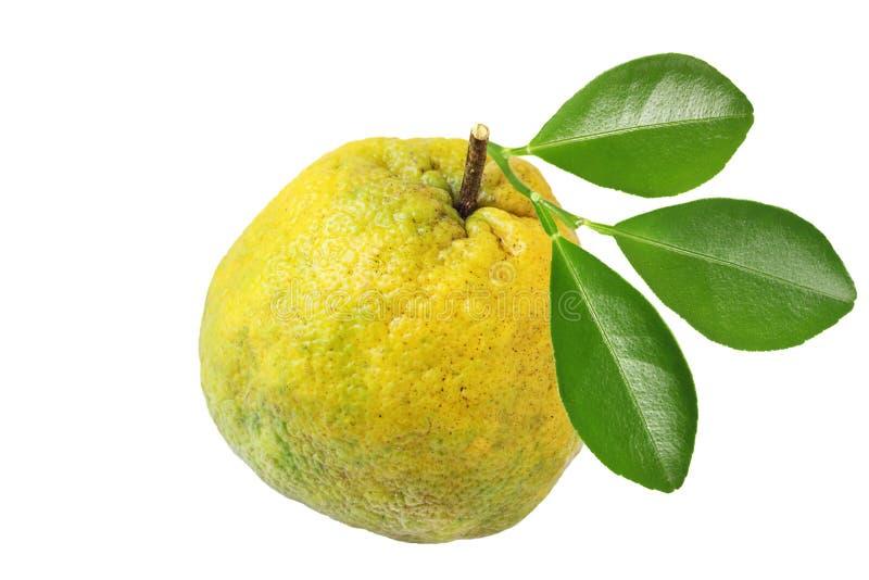Ugligrapefrukt arkivfoton
