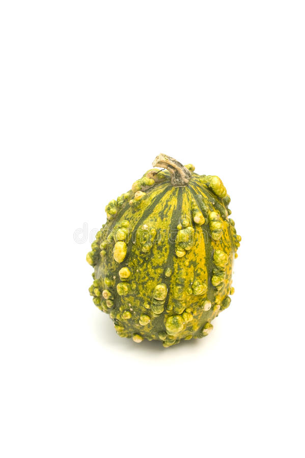 Ugly Autumn Squash Royalty Free Stock Images
