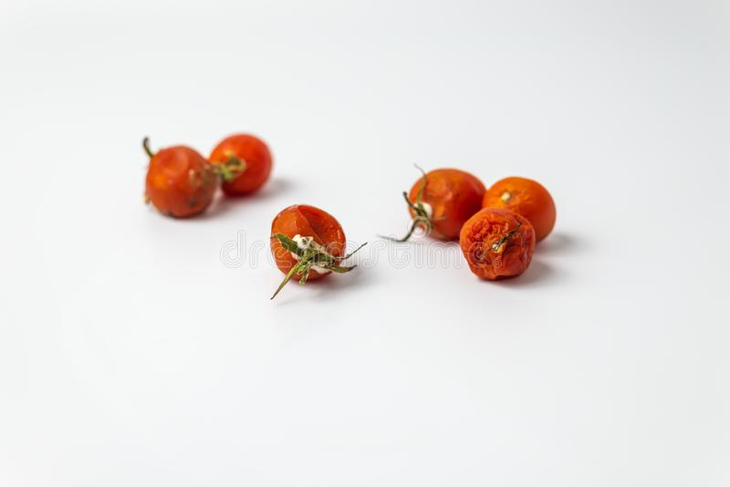Ugly cherry tomato with mold stock image