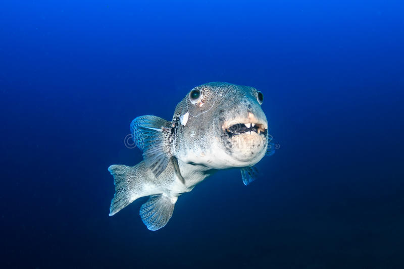 Ugly fish stock photo image 53379407 for Ugly fish pictures