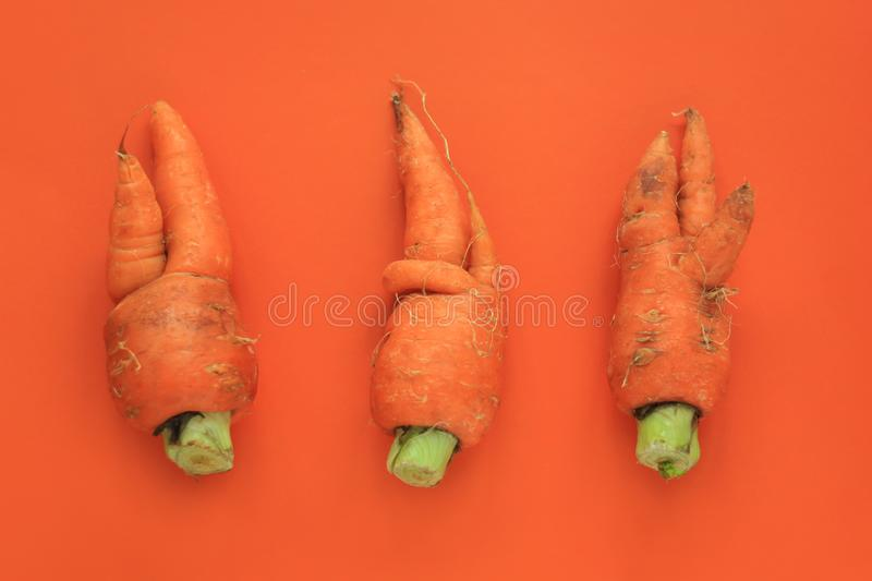 Ugly food. Deformed organic carrots on pastel background in green and orange duoton royalty free stock photography