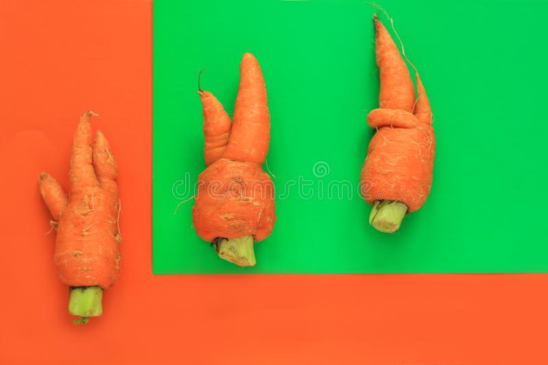 Ugly food. Deformed organic carrots on pastel background in green and orange duoton stock photos