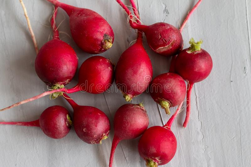 Ugly food trend. Radish is useful for female`s reproductive system. Organic homegrown vegetable. Isolated on grey textured background royalty free stock photo