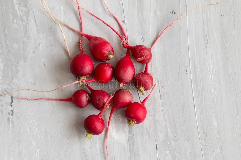 Ugly food trend. Radish is useful for female`s reproductive system. Organic homegrown vegetable. Isolated on grey textured background royalty free stock images