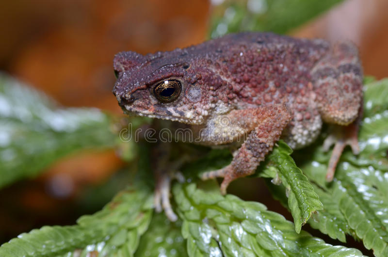 Ugly Frog Stock Photos