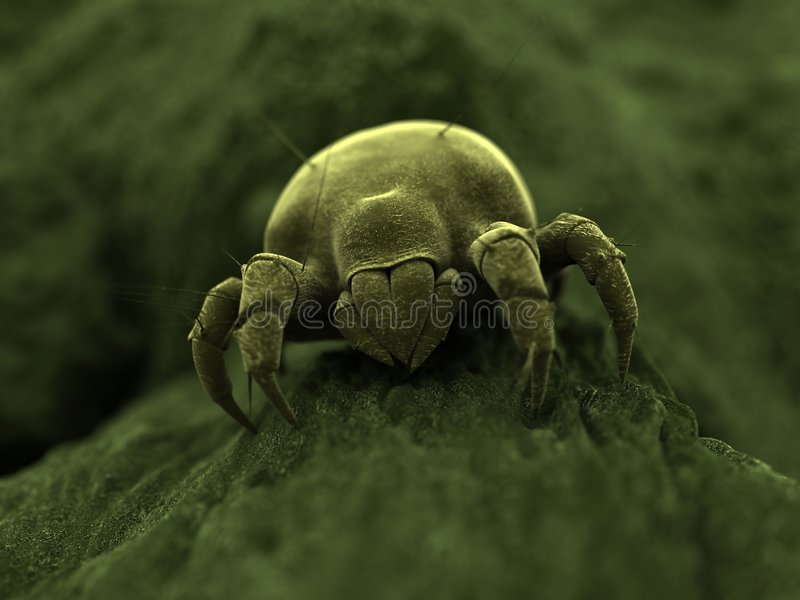 Ugly mite royalty free illustration