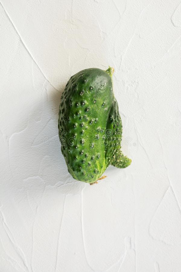 Ugly one cucumber. Concept organic vegetables. Close up. Ugly organic abnormal one cucumber. Concept organic vegetables. Close up royalty free stock photography