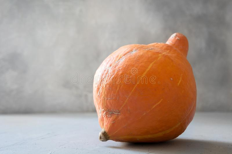 Ugly one organic pumpkin. Space for text. Concept organic vegetables. Ugly one organic pumpkin. Space for text. Concept organic natural vegetables stock photography