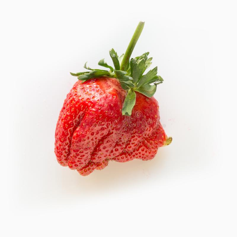 Ugly one ripe organic strawberry isolated on white background. View from above royalty free stock image