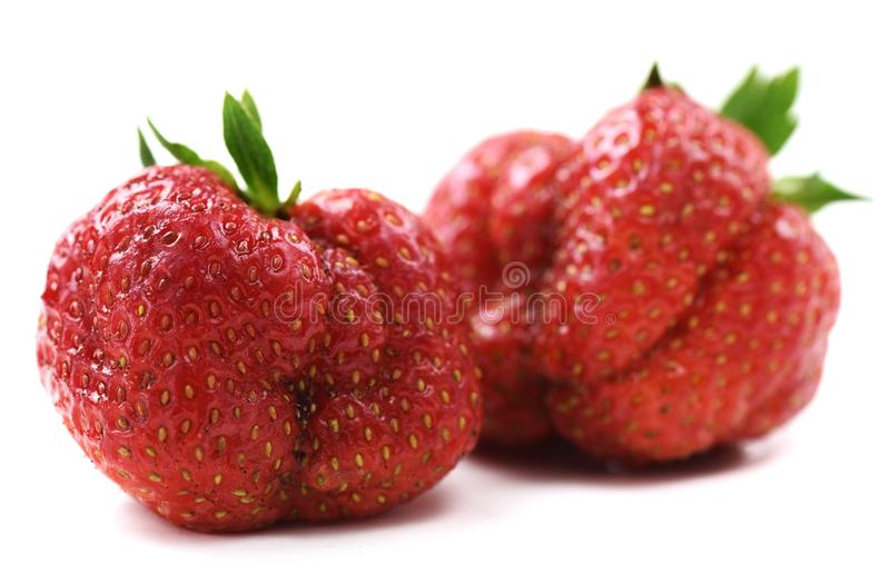 Ugly organic heirloom home grown strawberries isolated. Closeup stock photo