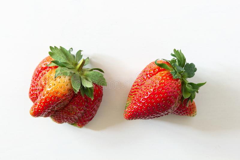 Ugly organic home grown strawberries on white wood background. Strange funny imperfect fruits and vegetables, misshapen produce, f. Ood waste concept. Top view royalty free stock photography