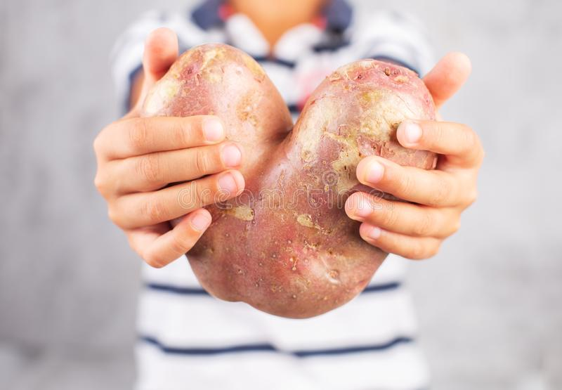 Boy holds ugly potato in the heart shape on a gray background. Funny, unnormal vegetable or food waste concept royalty free stock photography