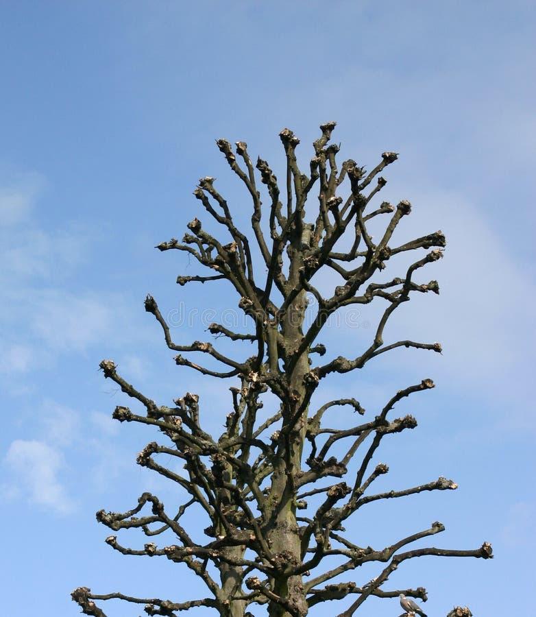 Ugly Tree Free Stock Photo