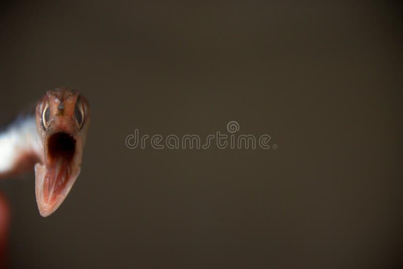 Download Ugryzienie zdjęcie stock. Obraz złożonej z zwierzęta, nagły - 145594