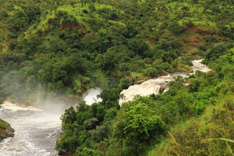 Uhuru cai no parque nacional de Murchison Falls fotos de stock