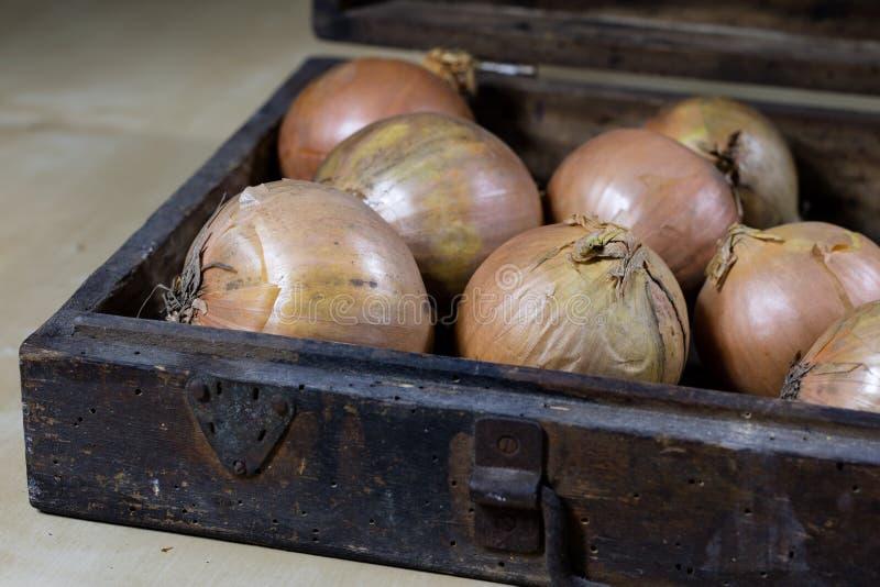 Ui beste specifiek voor griep Stroop van onio wordt voorbereid die stock foto