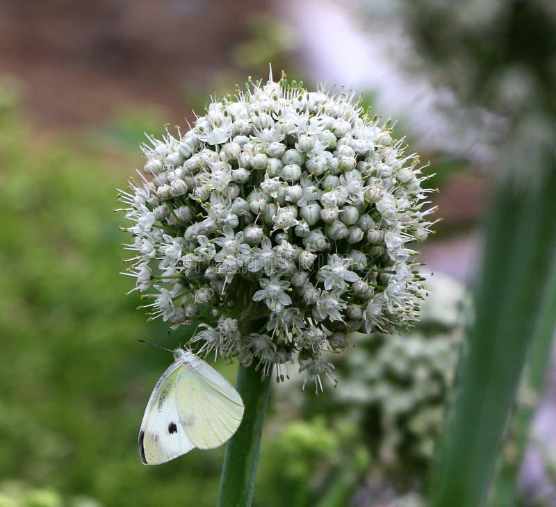 Uibloem en vlinder stock foto's