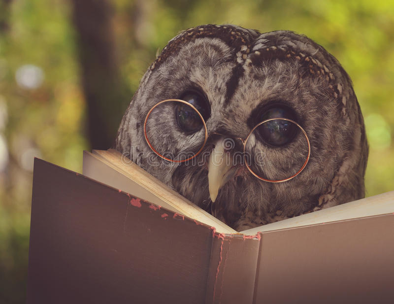 Uil in Glazen die Oud Schoolboek lezen stock fotografie