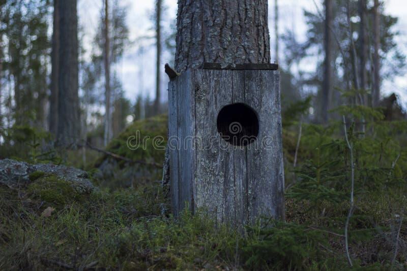 Uilhuis die zich op grond van een bemost bos, naast een pijnboomboom bevinden royalty-vrije stock fotografie