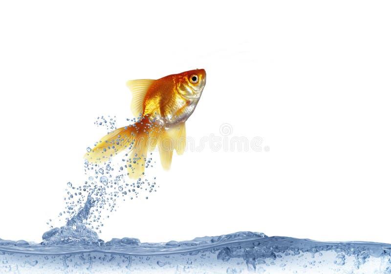 Uit het springen van vissen royalty-vrije stock afbeelding