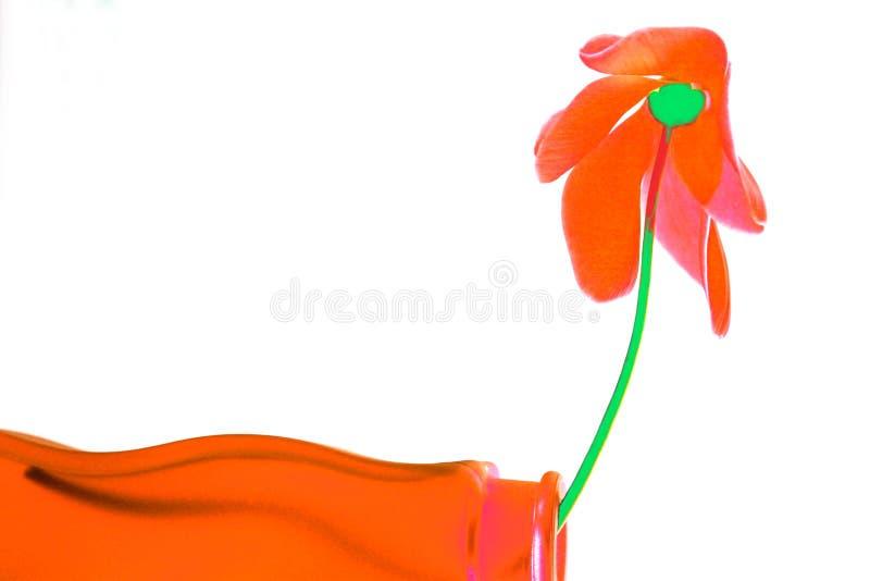 Uitdrukking in sinaasappel stock afbeelding