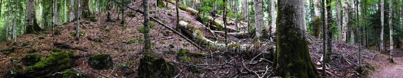 Uiterst Breed Panorama van Diep Bos royalty-vrije stock afbeeldingen