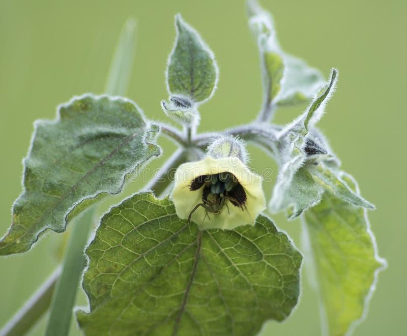 Uiterst klein insect in bloem royalty-vrije stock afbeeldingen