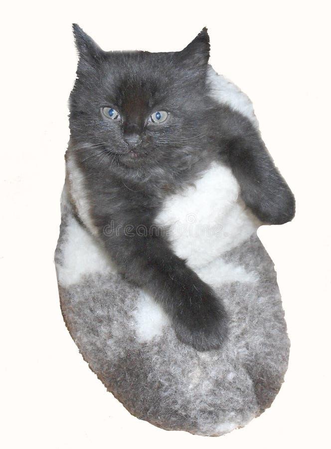 Uiterst klein leuk zwart katje in gevoelde laars stock foto