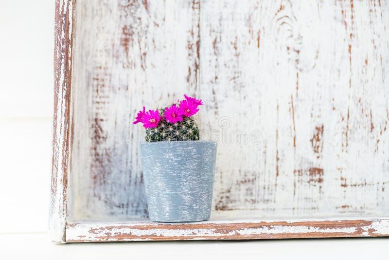 Uiterst kleine Bloeiende Cactus in de Pot royalty-vrije stock fotografie