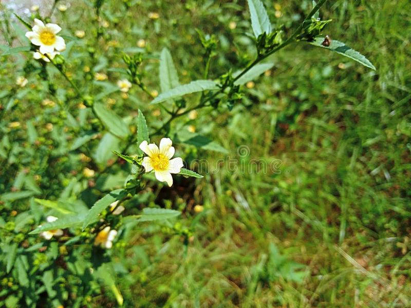 Uiterst kleine gele bloem uit onscherpe achtergrond van nadruk de groene bladeren stock afbeeldingen