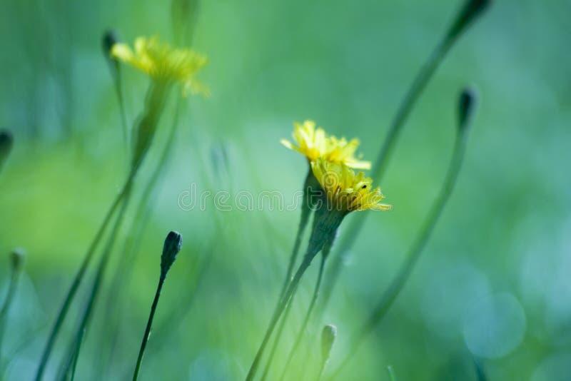 Uiterst kleine gele bloemen royalty-vrije stock foto's