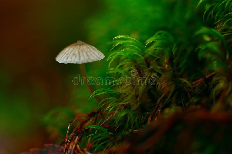 Uiterst kleine grijze paddestoel in het bos royalty-vrije stock foto