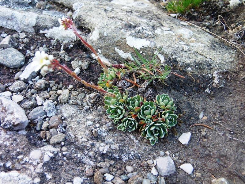 Uiterst kleine groene bloemen op een grijze backround royalty-vrije stock afbeelding