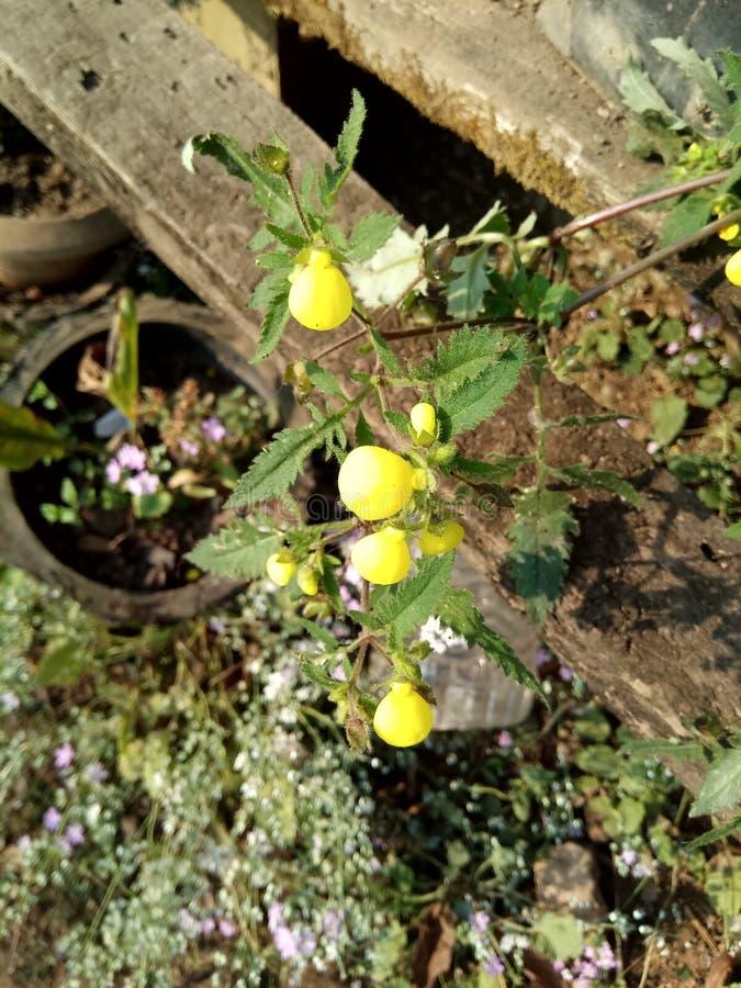 Uiterst kleine leuke bloem royalty-vrije stock foto's
