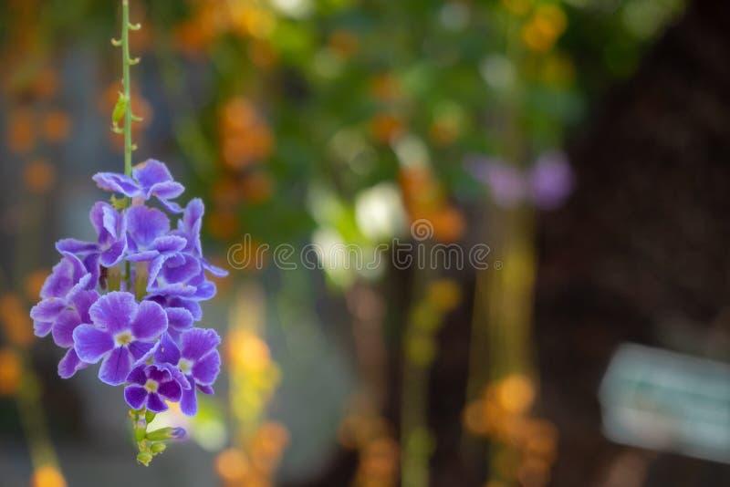 Uiterst kleine leuke en charmante bloemen die van de boom op vage achtergrond hangen stock afbeelding