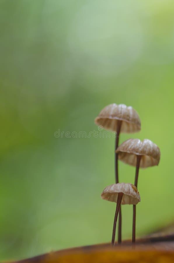 Uiterst kleine paddestoelen stock foto