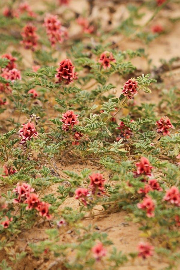 Uiterst kleine Rode bloemen op bruine achtergrond stock afbeeldingen