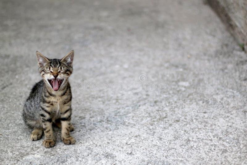 Uiterst kleine Tabby Kitten royalty-vrije stock fotografie