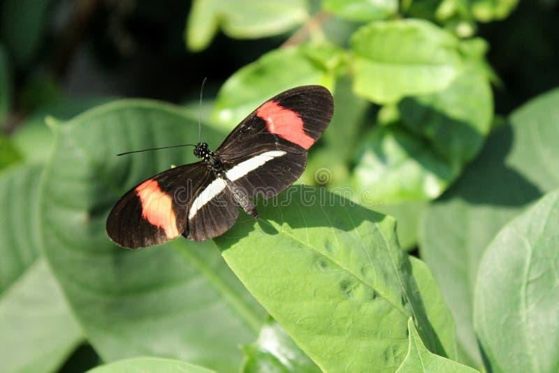 Uiterst kleine vlinder royalty-vrije stock foto