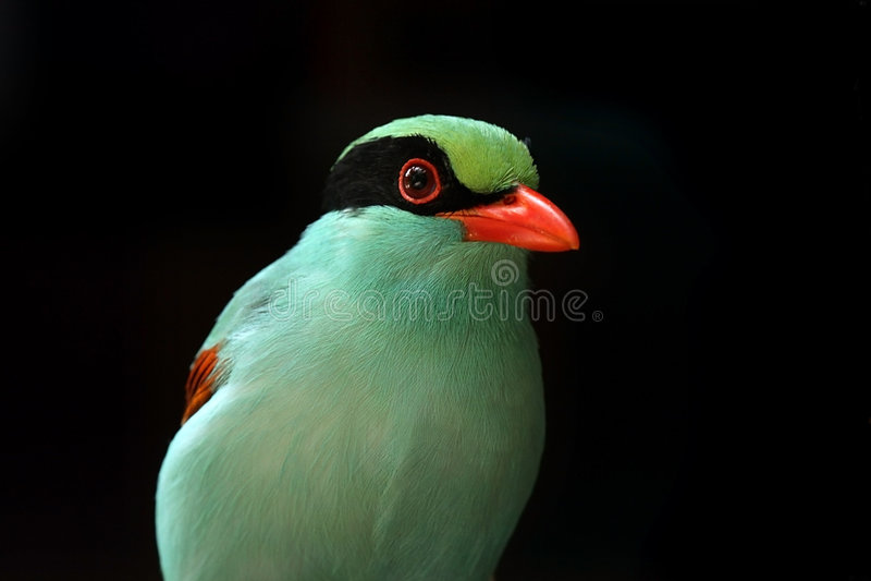 Uiterst kleine Vogel stock fotografie