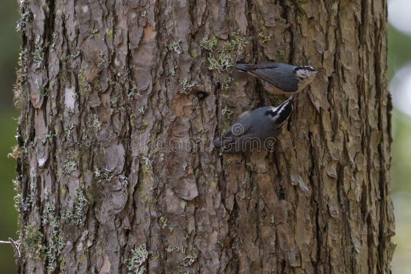 Uiterst kleine vogel op een voeder in een bos royalty-vrije stock afbeelding