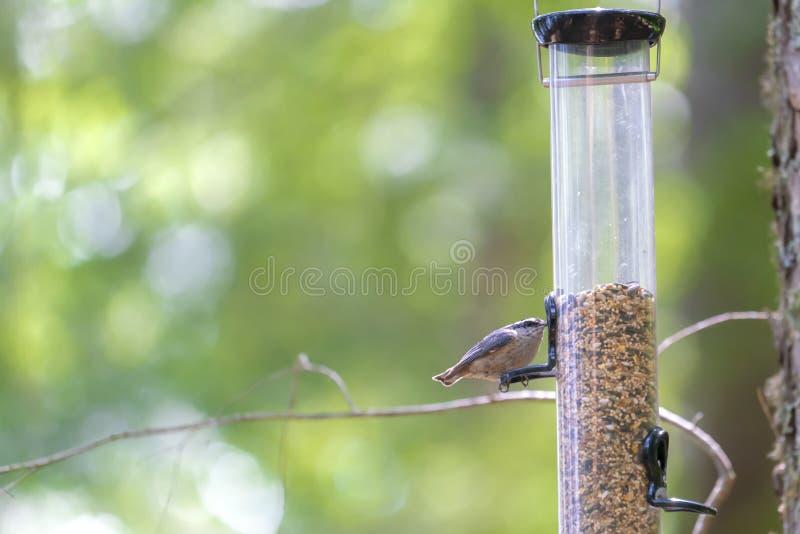 Uiterst kleine vogel op een voeder in een bos stock afbeeldingen