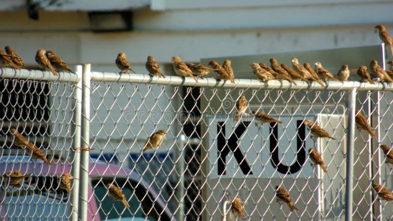Uiterst kleine Vogelbijeenkomst stock foto
