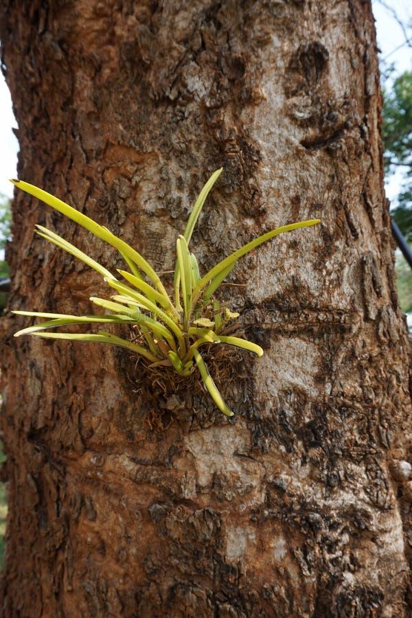 Uiterst kleine wilde orchideebloemen stock fotografie